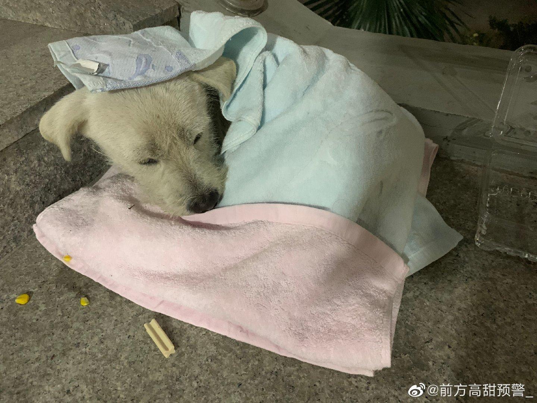 上海流浪狗领养宠物救..
