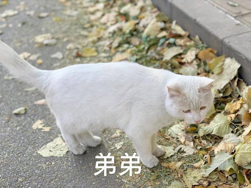 【北京领养】流浪宠物..