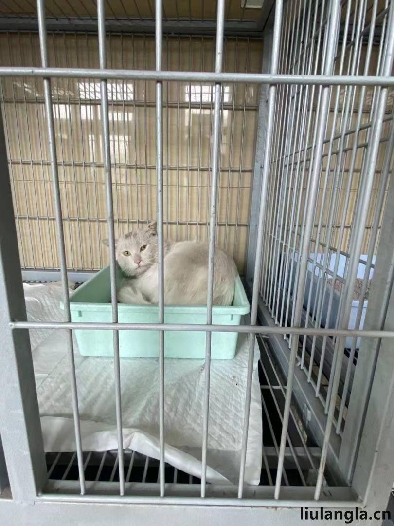 北京市通州区免费领养猫咪领养