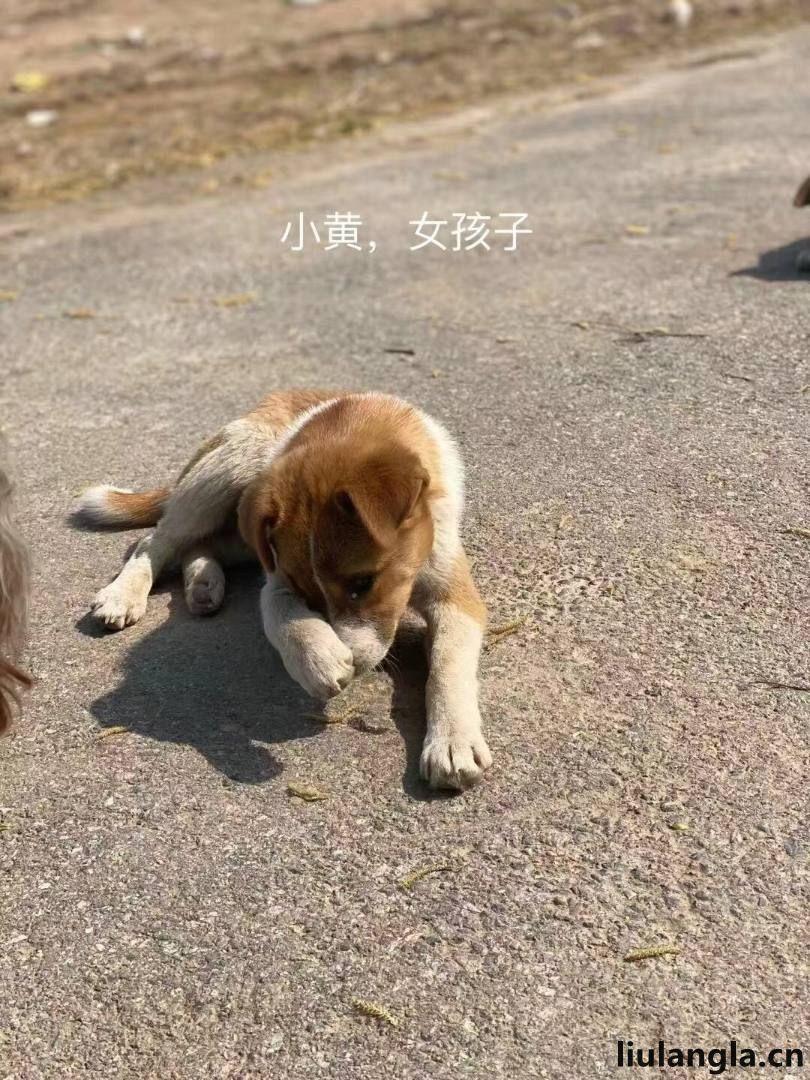 北京市免费领养流浪狗