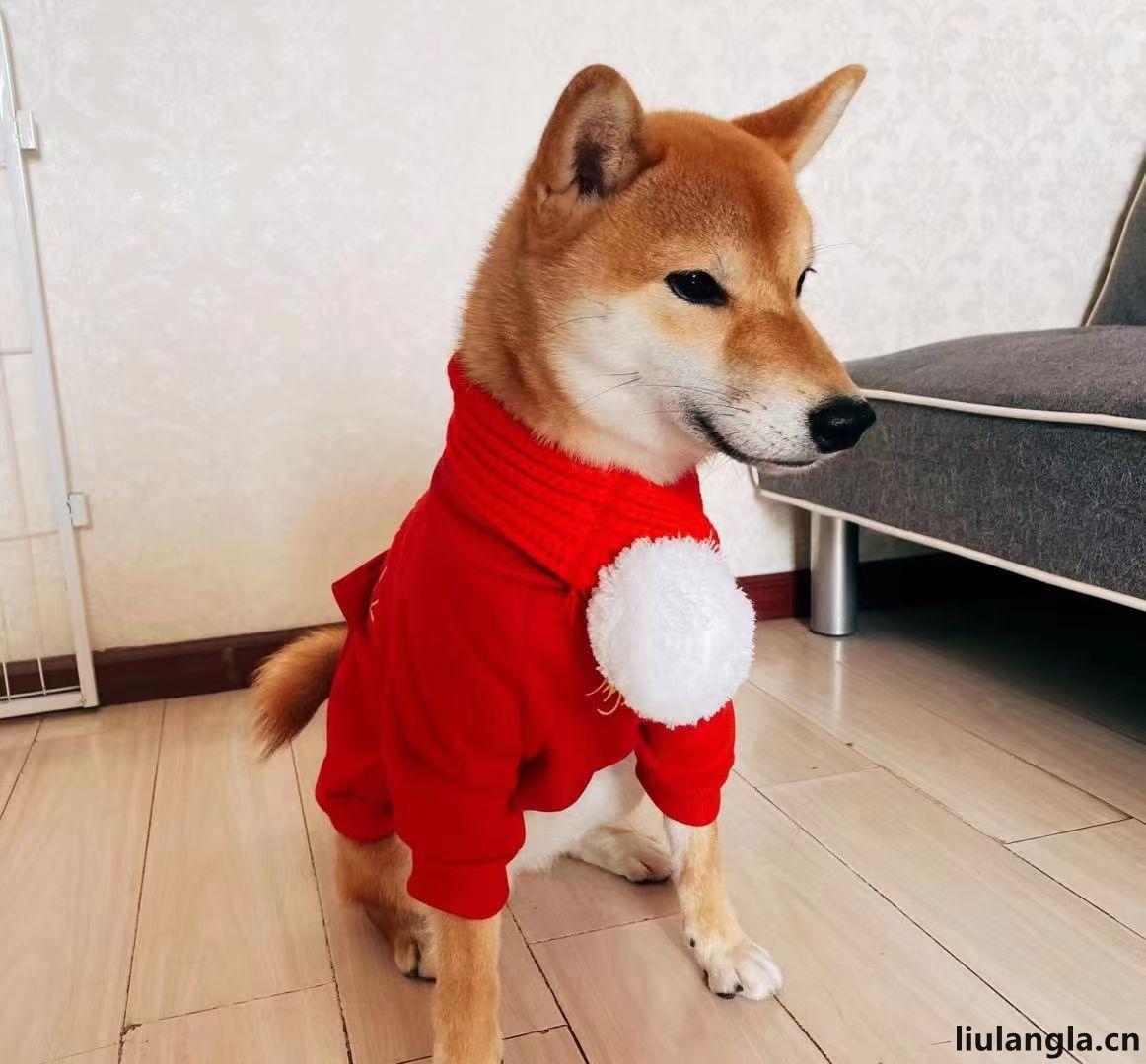 北京市宠物领养。领养狗狗
