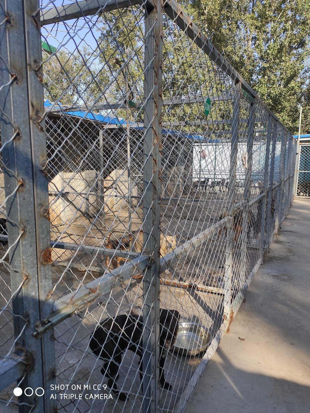 北京市,宠物救助领养中心,流浪狗救助站官网平台,顺义区