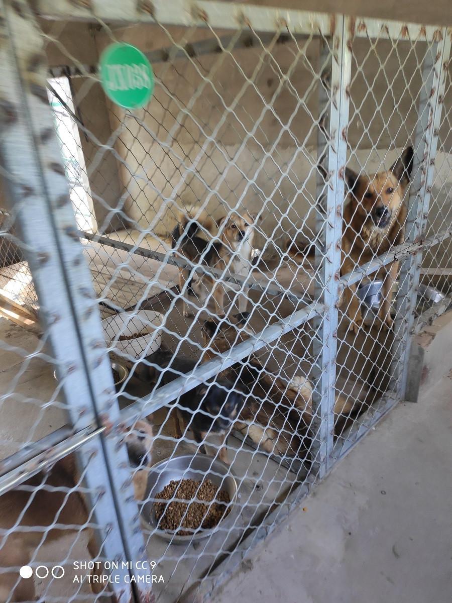苏州市,宠物救助领养中心,流浪狗救助站官网平台,昆山市